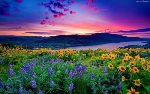 Gambar Pemandangan Indah di Dunia24